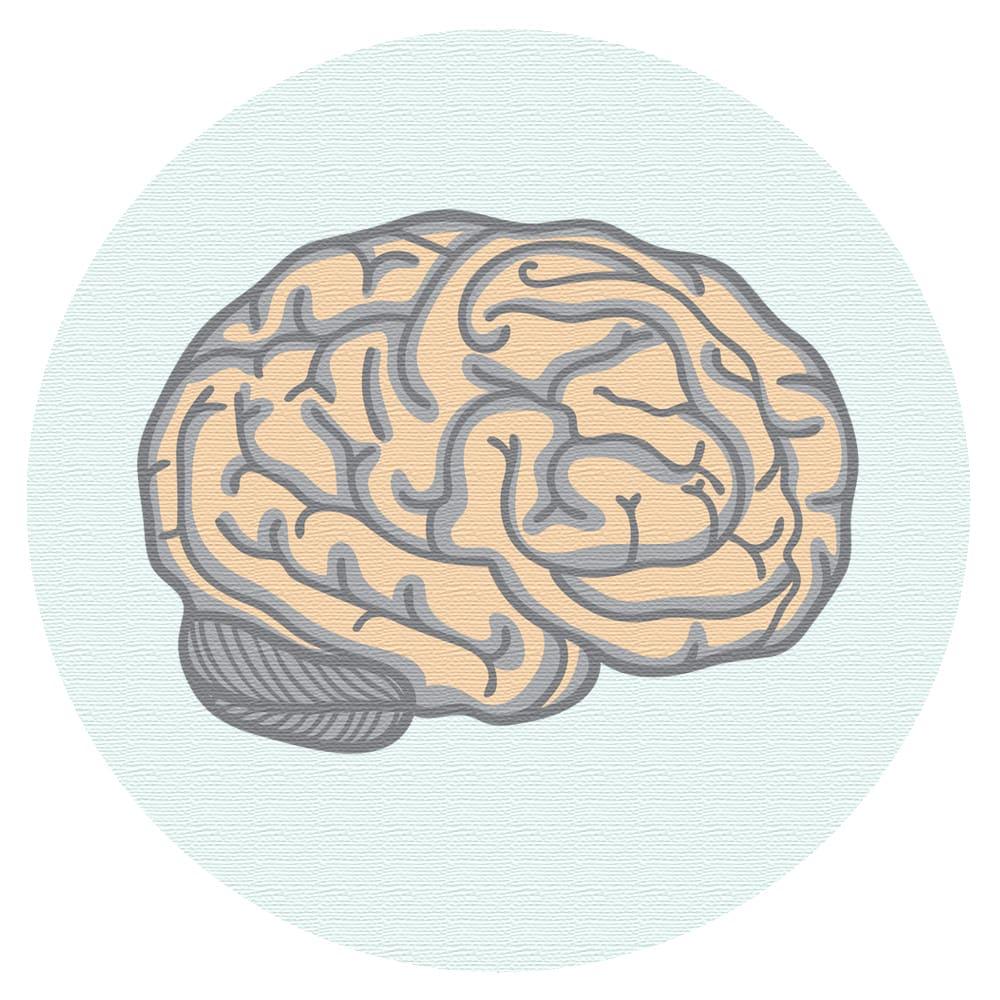 Hjerne. Illustrasjon.